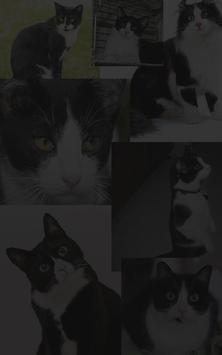 Jumper Cat - Kucing Loncat 截图 2
