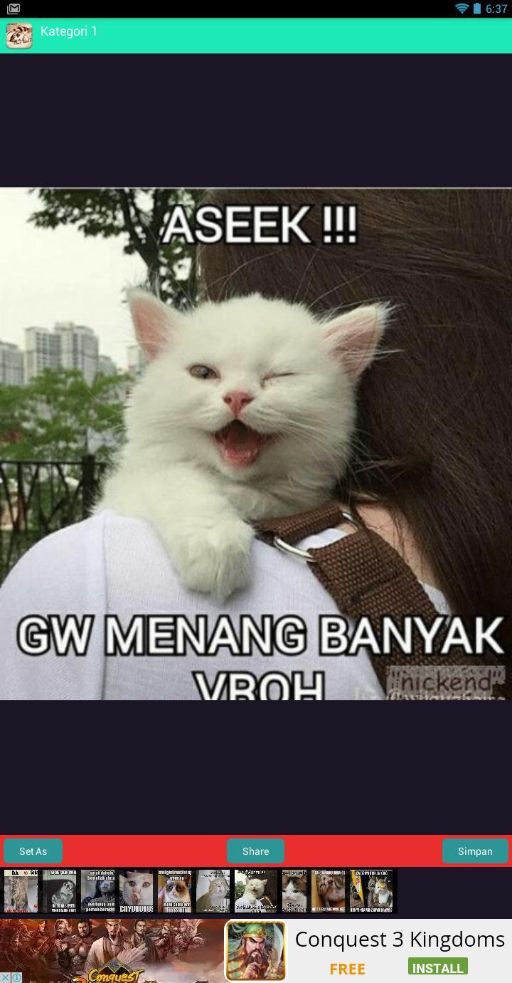 78 Gambar Gambar Kucing Gemes Terlihat Keren
