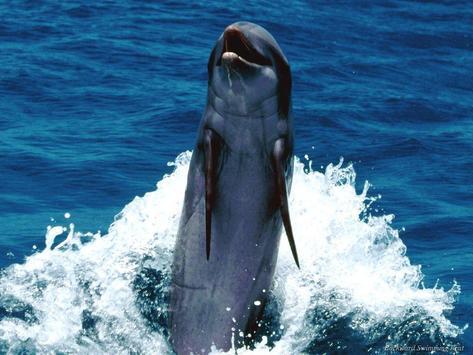Best Oceans HD Wallpapers screenshot 6