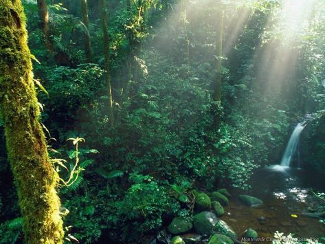 Amazing Forests HD Wallpapers apk screenshot