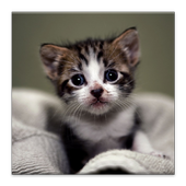 Cat Lovers Collection icon