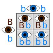Punnet Square icon
