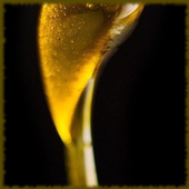 Dabs wallpaper icon
