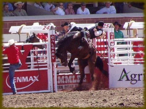 Rodeos wallpaper apk screenshot