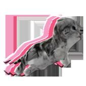 RunnerCat icon