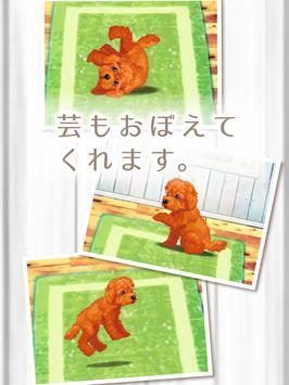 癒しの子犬育成ゲーム〜トイプードル編〜 screenshot 7