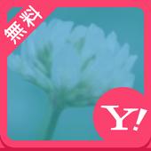 かわいいポップフラワー【壁紙 無料きせかえ】buzzHOME icon
