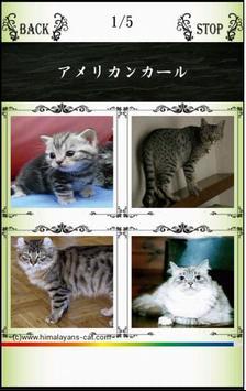 Names/わんにゃばー いろんな名前覚えよう(犬・猫・鳥) apk screenshot
