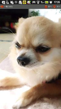 犬写真集④ ビンゴ screenshot 3