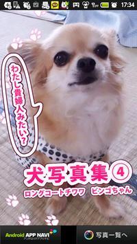 犬写真集④ ビンゴ poster