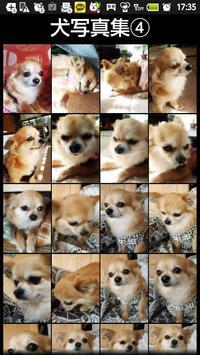 犬写真集④ ビンゴ screenshot 1