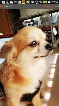 犬写真集④ ビンゴ screenshot 2
