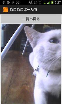 ねこねこぱーんち(猫カメラ) screenshot 4
