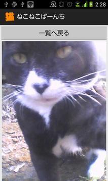 ねこねこぱーんち(猫カメラ) screenshot 5