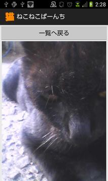 ねこねこぱーんち(猫カメラ) screenshot 6
