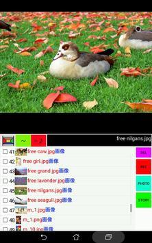 画像と声のギャラリー screenshot 6