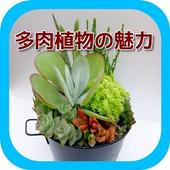 多肉植物の魅力 スライドver. icon