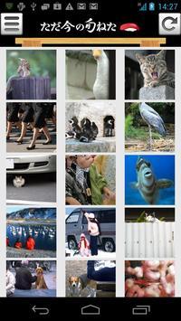 暇人専用 旬の面白ネタ・猫・犬画像まとめアプリ ねたっぷる apk screenshot