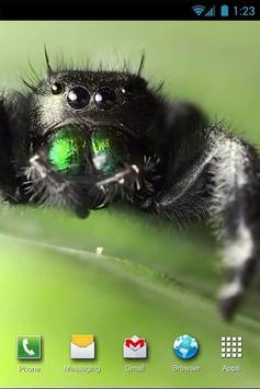 Jumping Spider LiveWP poster