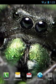 Jumping Spider LiveWP apk screenshot