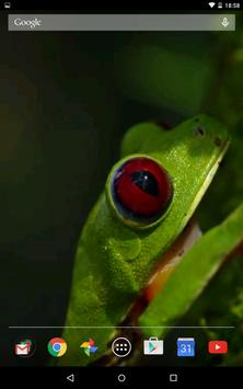 Jungle frog video wallpapers apk screenshot