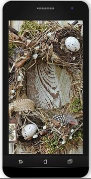 Pine Cone Projects poster