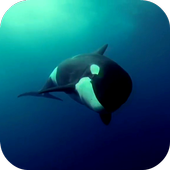 Orca 3D Video Wallpaper icon