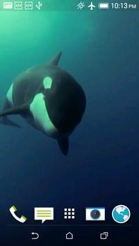 Orca 3D Video Wallpaper poster