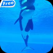 Orca Whale Video Live Wallpaper icon