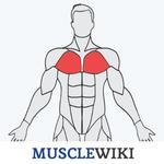 MuscleWiki Fitness APK