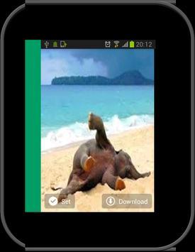 1000 Summer wallpapers apk screenshot