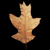 PlantList icon