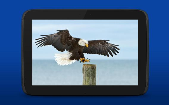 iKnow Birds 2 LITE - USA screenshot 15