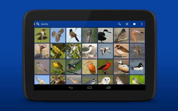iKnow Birds 2 LITE - USA screenshot 12