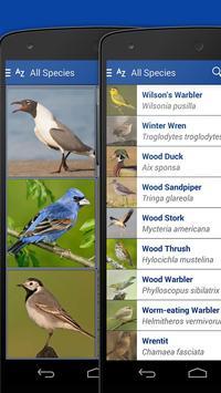iKnow Birds 2 LITE - USA screenshot 3