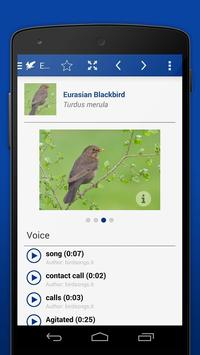 iKnow Birds 2 LITE - USA screenshot 4