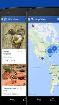 iKnow Birds 2 LITE - USA screenshot 6