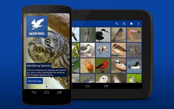 iKnow Birds 2 LITE - USA screenshot 8