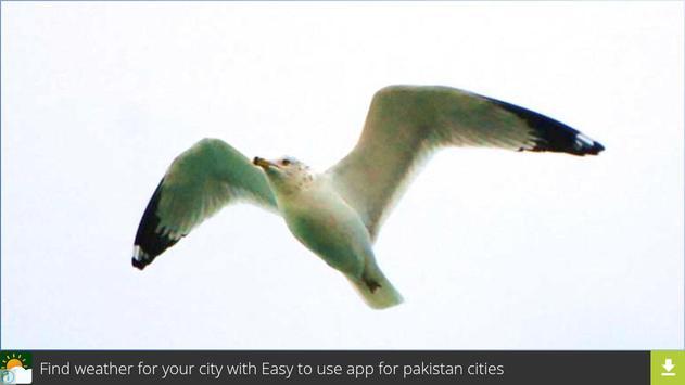 Don Gull Wallpapers apk screenshot