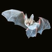 Bat App (Unreleased) icon