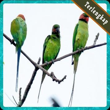 Kumpulan Kicau Burung Untuk Memikat Terlengkap poster