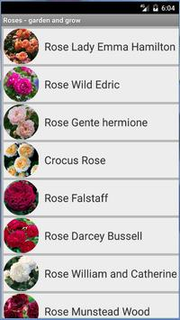Roses - garden and grow poster