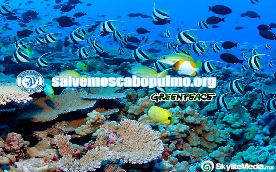 Salvemos Cabo Pulmo poster