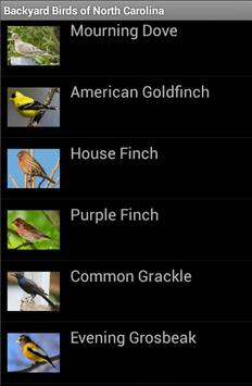 Backyard Birds of NC poster