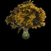 Ethiopia Tree Species Finder icon