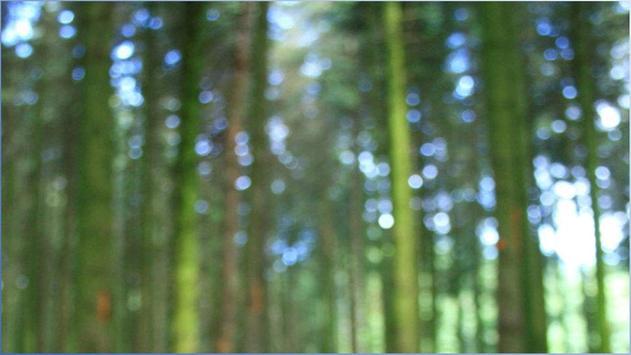 1024 Nature Photos screenshot 3