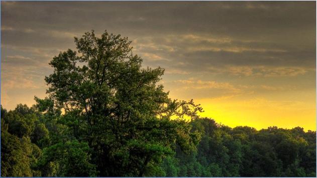 1024 Nature Pictures screenshot 4