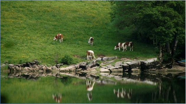 Nature World Photos screenshot 1