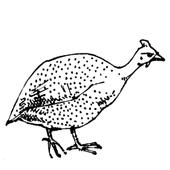 Le guinea fowl and the chicken. icon