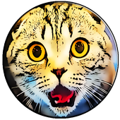 Ultrasound For Cats Joke icon